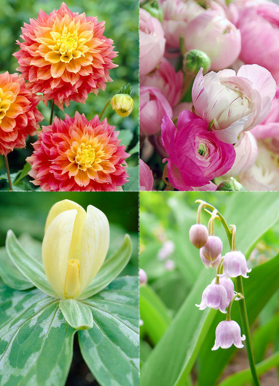 Bulbs for Summer Blooms
