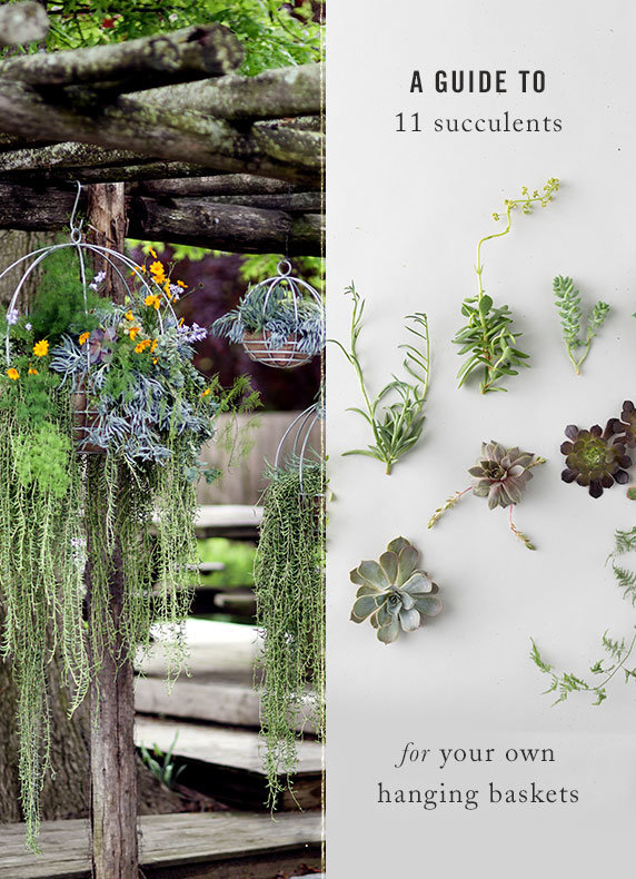 A Guide to 11 Succulents for your own Hanging Baskets