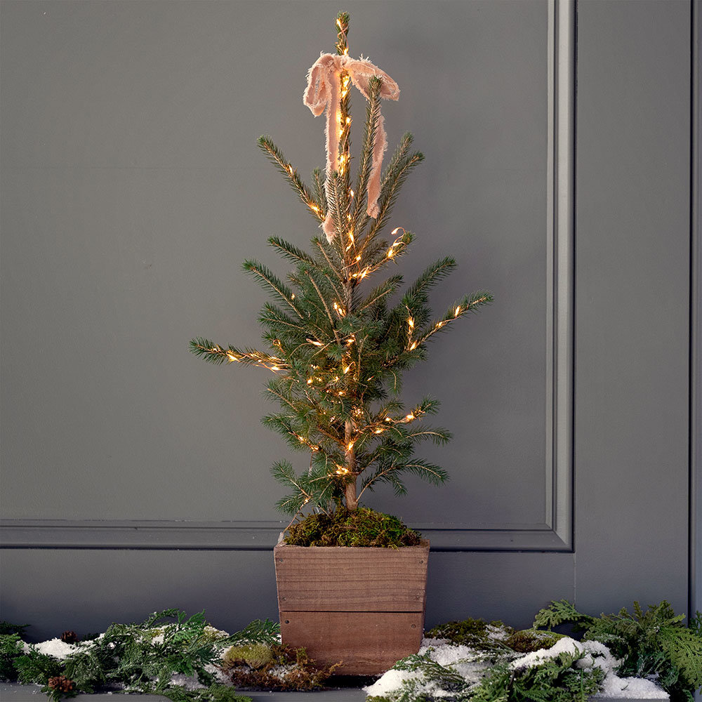 The Little Living Tree | and more top gifts under $100