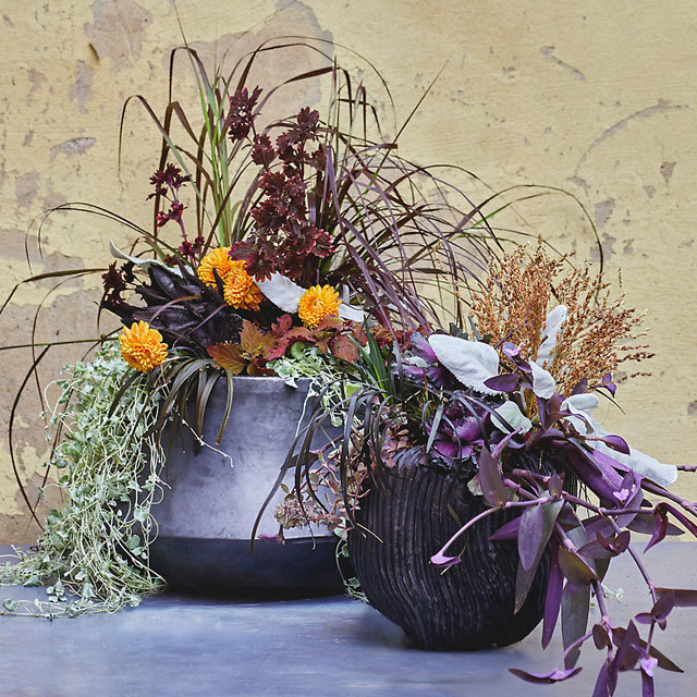 The Supernaturals | moody planters to evoke season's spirit