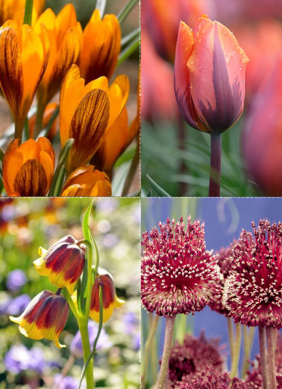 Fall Bulbs for Spring Blooms | Over 60 varieties to plant now