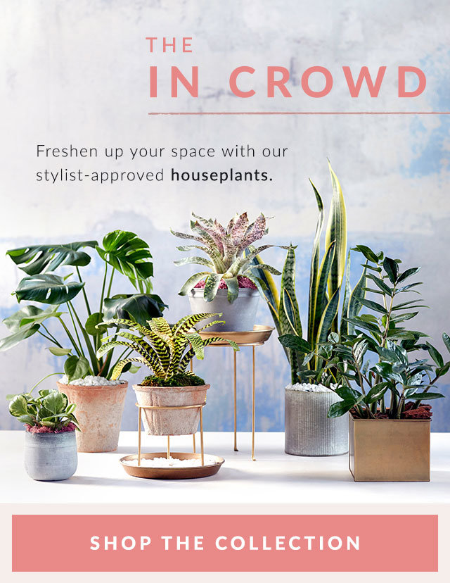 The In Crowd | Freshen up your space with our stylist-approved houseplants.